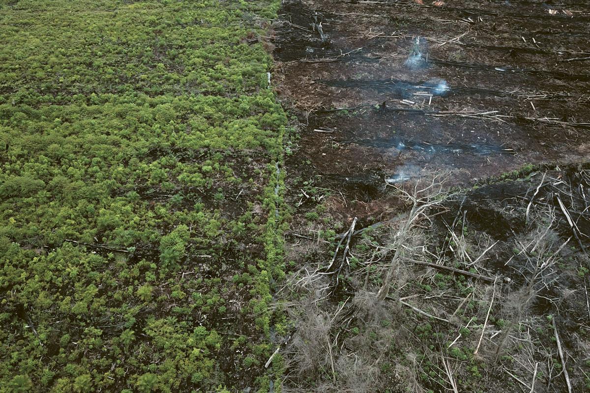 La production de l'huile de palme est à l'origine d'une déforestation massive.